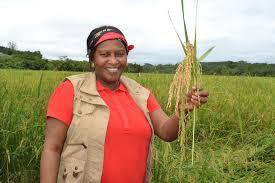 Promotion du secteur agricole guinéen: la ministre Mariama ''Soguipah'' Camara en séjour de travail en Europe